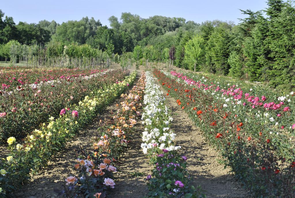 sortiment našich růží